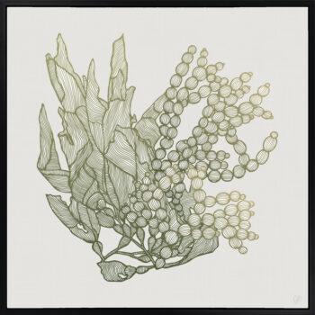 Sea Garden Seaweed 1 Canvass Black Square Frame
