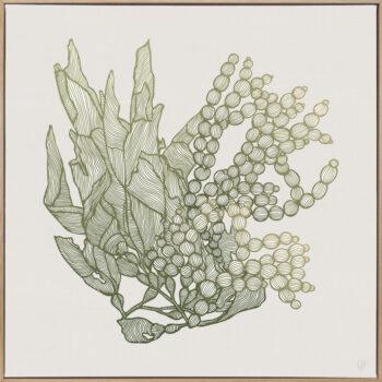 Sea Garden Seaweed 1 Canvass Oak Square Frame