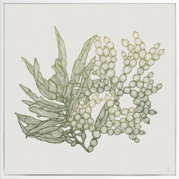 Sea Garden Seaweed 2 Canvass White Square Frame