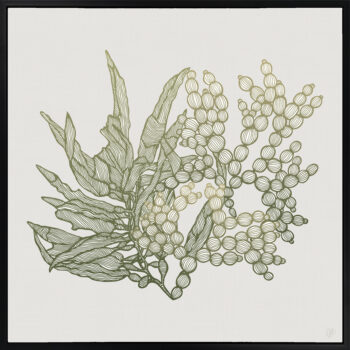 Sea Garden Seaweed 2 Canvass Black Square Frame