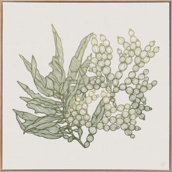 Sea Garden Seaweed 2 Canvass Oak Square Frame