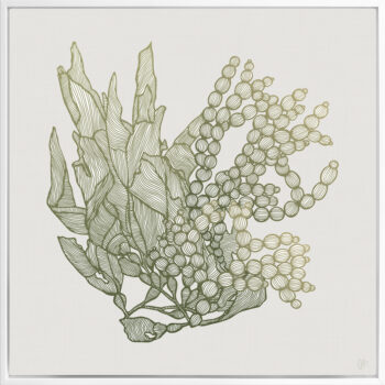 Sea Garden Seaweed 1 Canvass White Square Frame